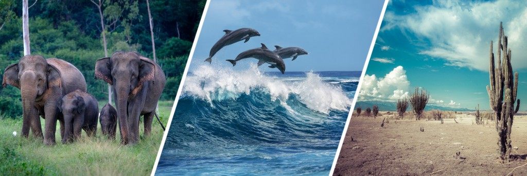 Three beautiful dolphins jumping over breaking waves & Family of wild elephants in forest of Kuiburi National Park & desert, cactus in desert