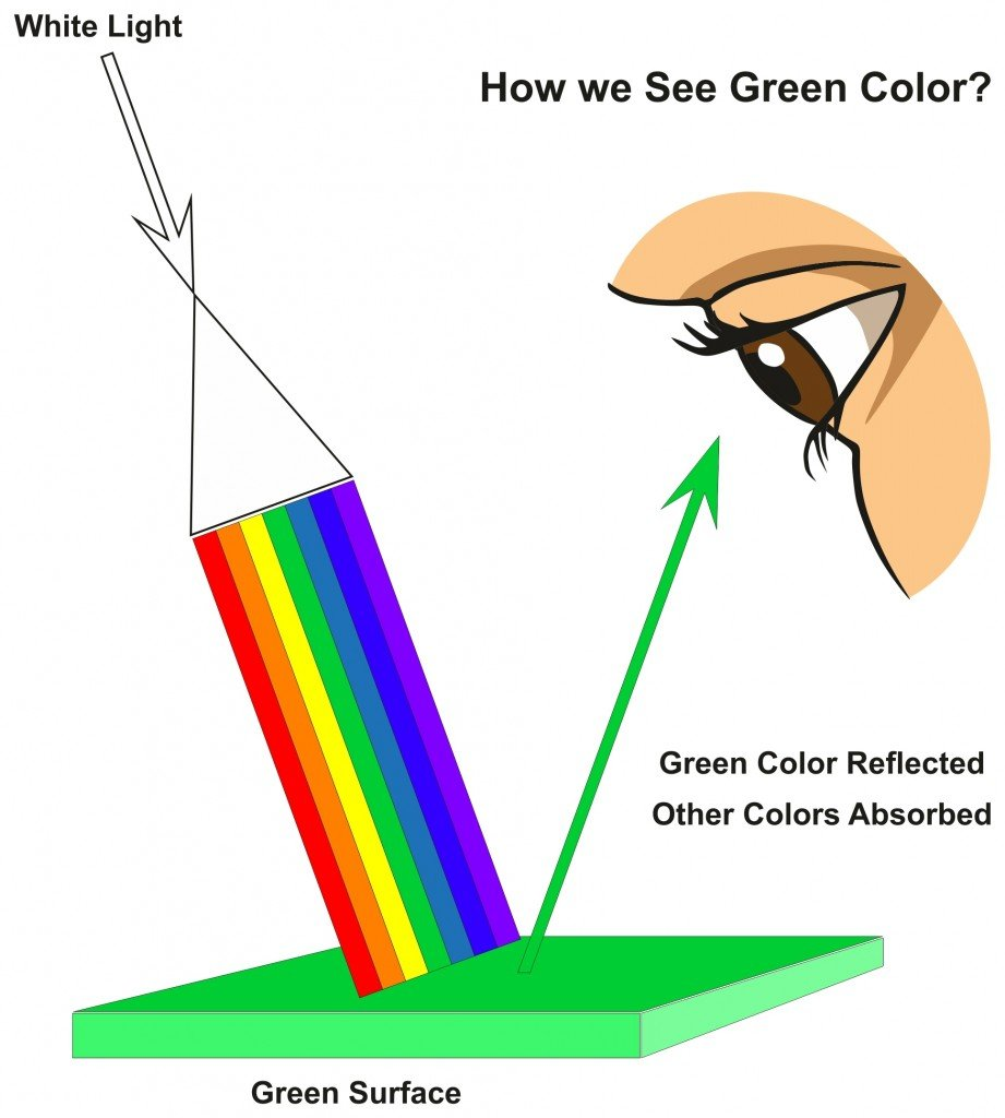 How we See Green Color infographic diagram(udaix)s