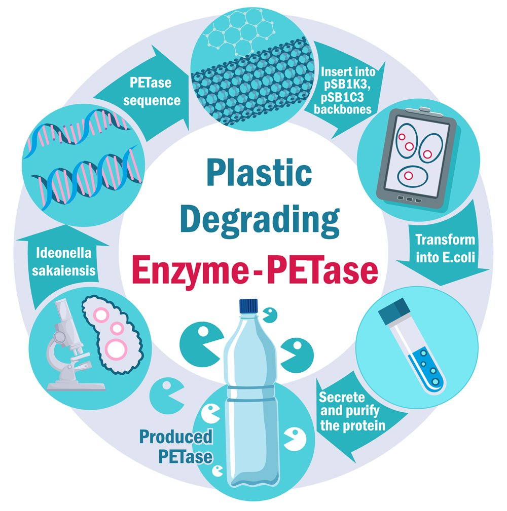 Plastic Degrading Enzyme(Varlamova Lydmila)s