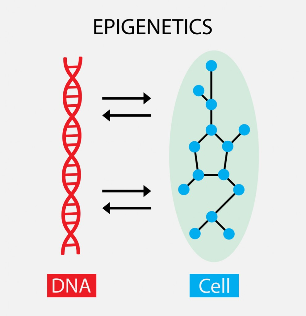 The interaction between DNA and cells(Nasky)S