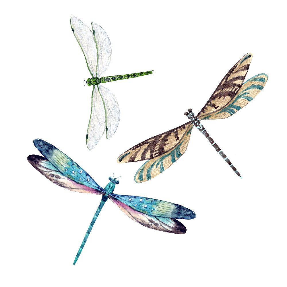 Watercolor set of dragonfly(Anastasia Lembrik)S