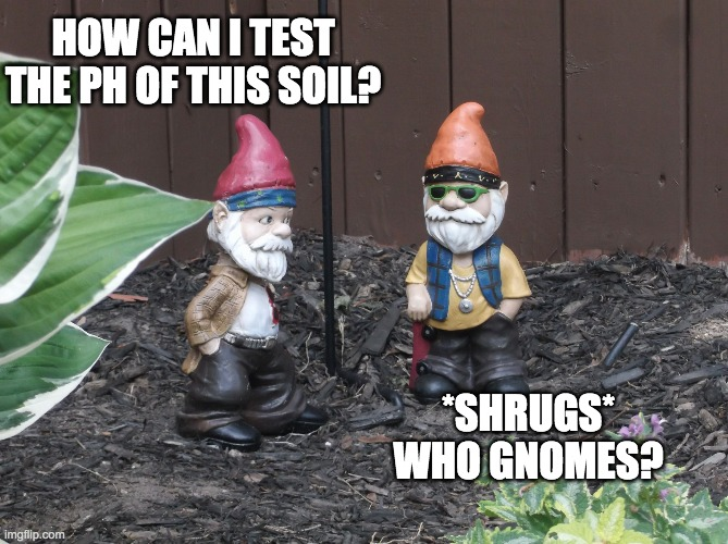 How can i test the ph of this soil meme