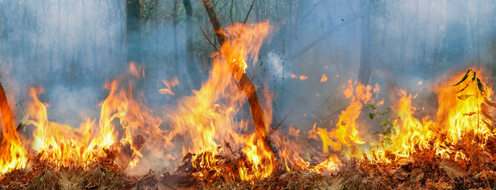 Amazon rain fire disaster is burning at a rate scientists have never seen befor(Toa55)s