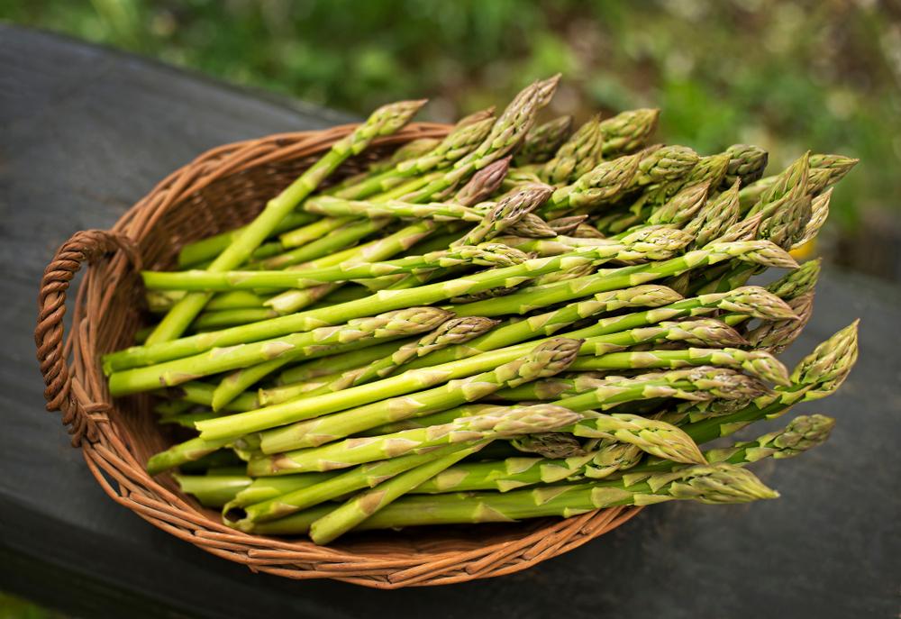 Asparagus(DUSAN ZIDAR)s