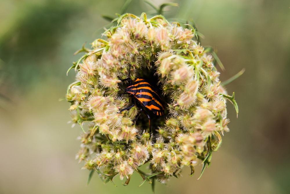 Bug hiding in the bloom(Erik Jurman)s