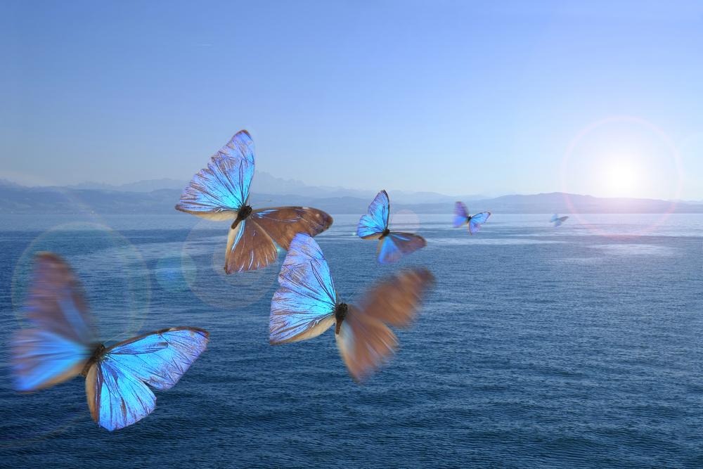 Butterflies in the swarm over a lake(Bildagentur Zoonar GmbH)s
