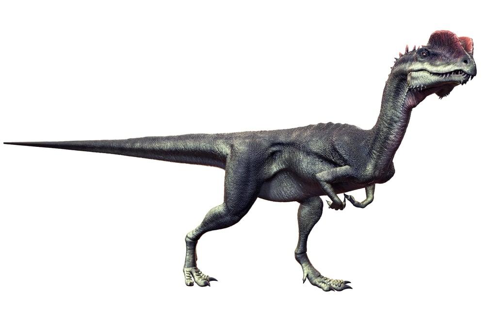 Dilophosaurus( Herschel Hoffmeyer)s