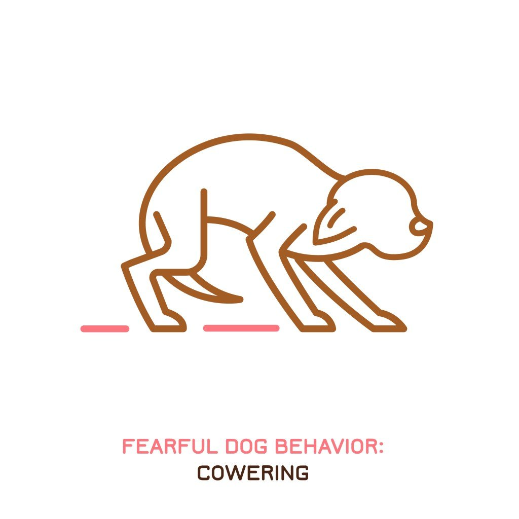 Dog fearful behavior icon. Domestic animal or pet tail language(Double Brain)s