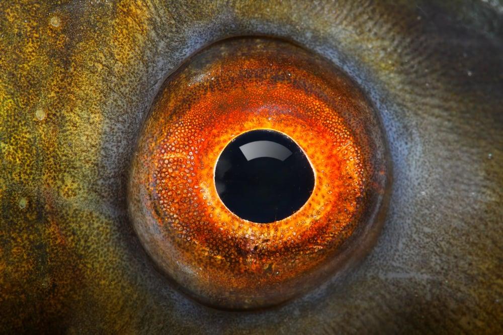 Fish eye(Kletr)s