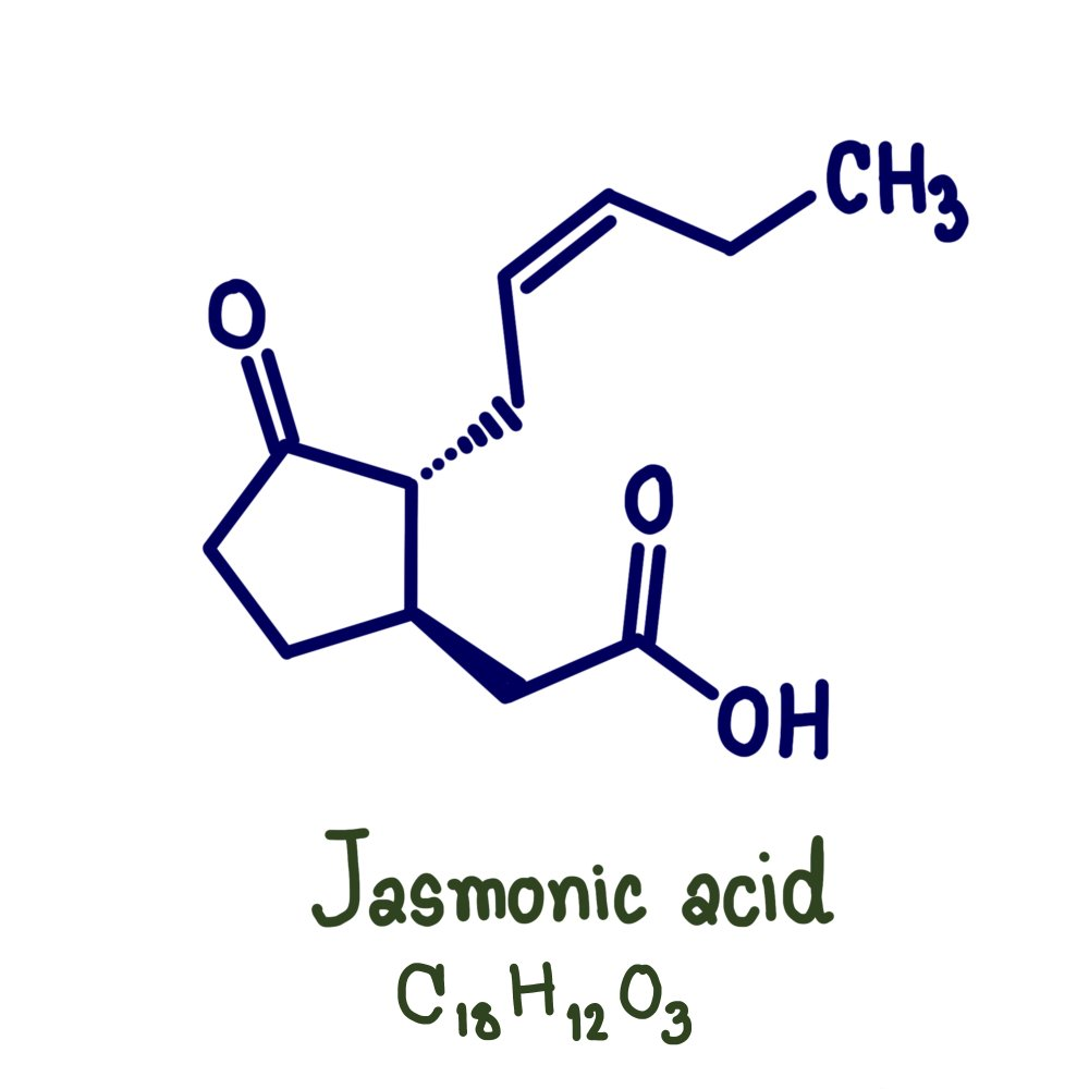 Jasmonic acid. Definition(PNOIARSA)s