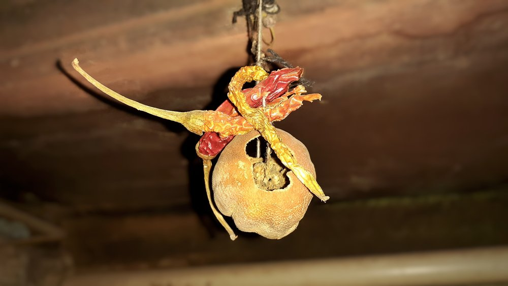 Lemon chillies hanging superstition(DHARMESH BHUTAIYA)s