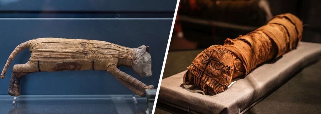Mummified ancient Egyptian cats