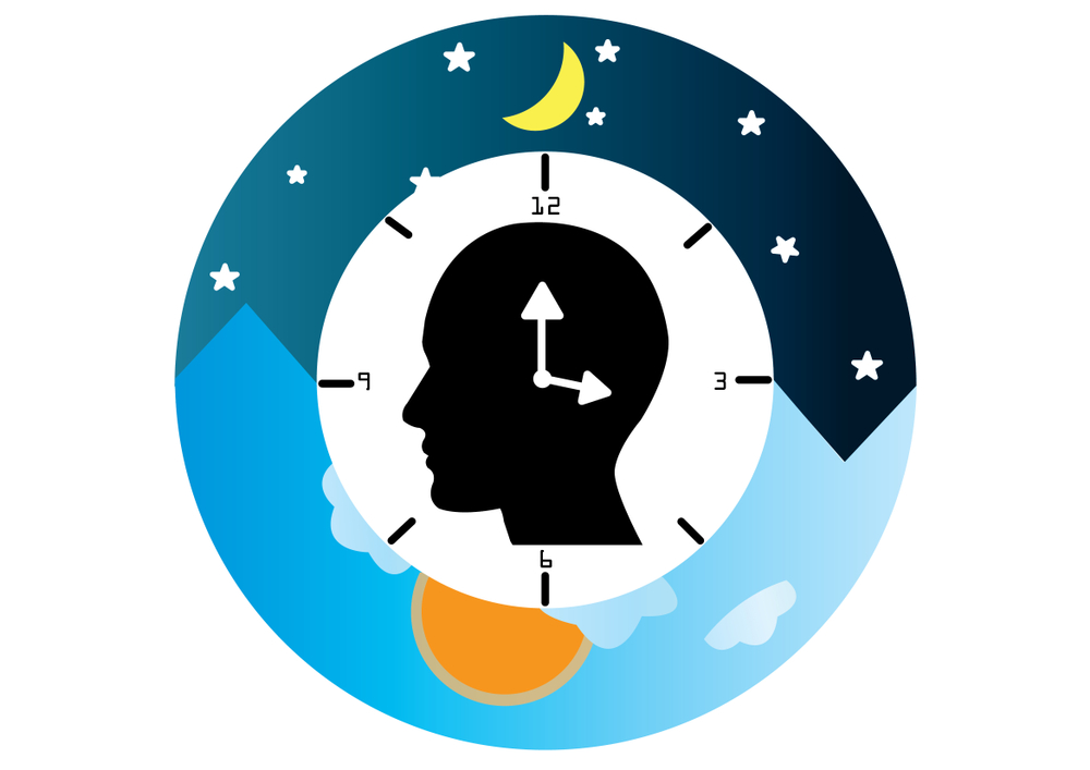 The circadian rhythms are controlled by circadian clocks(kanyanat wongsa)s