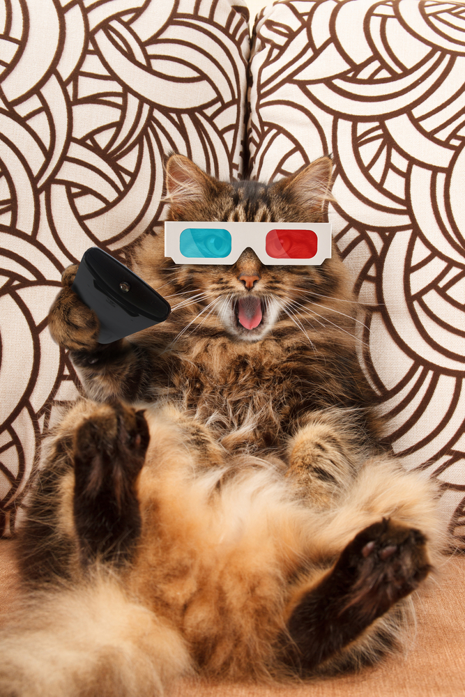 Funny cat with a remote control to TV(FotoYakov)S