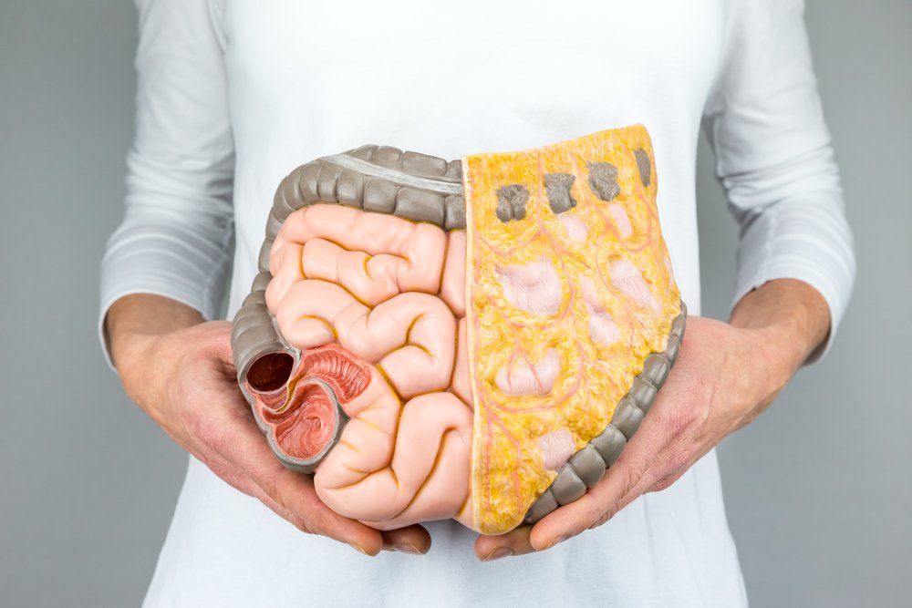 Woman holding model of human intestines in front of body on white background(Ben Schonewille)s