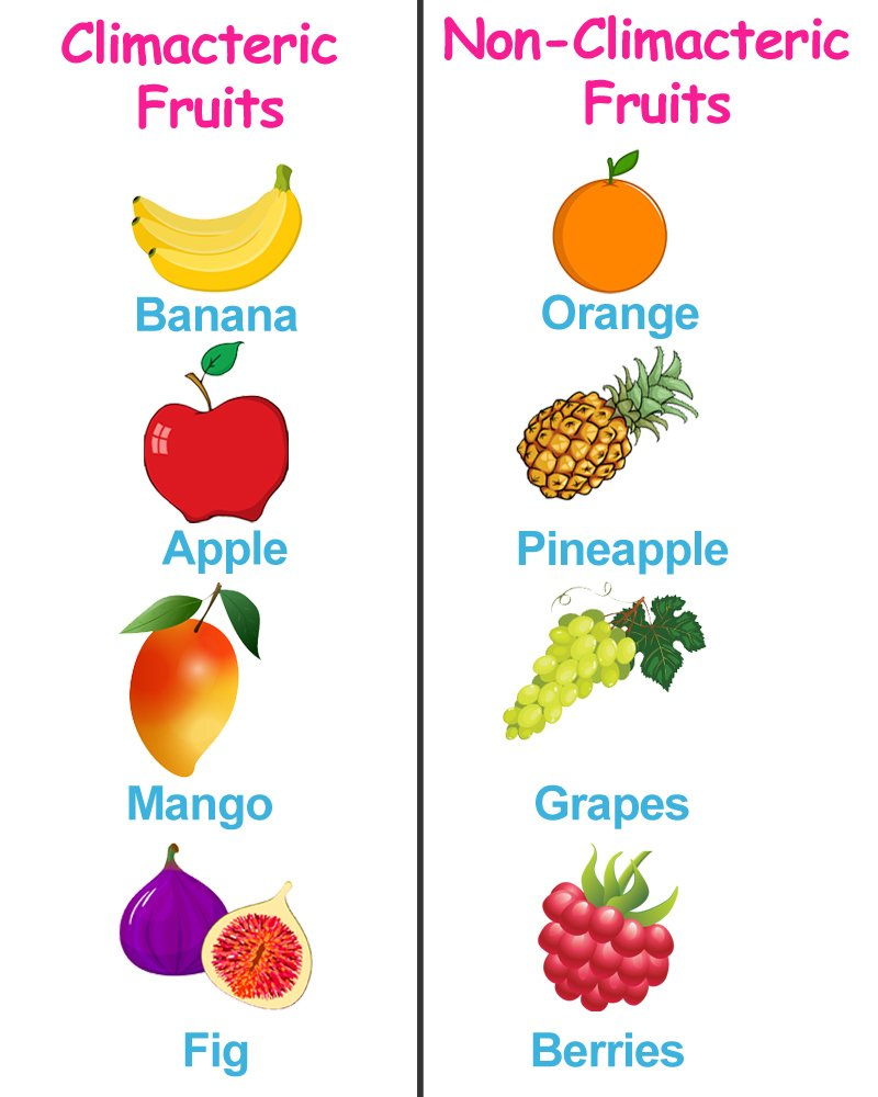 climacteric and non climacteric fruit table