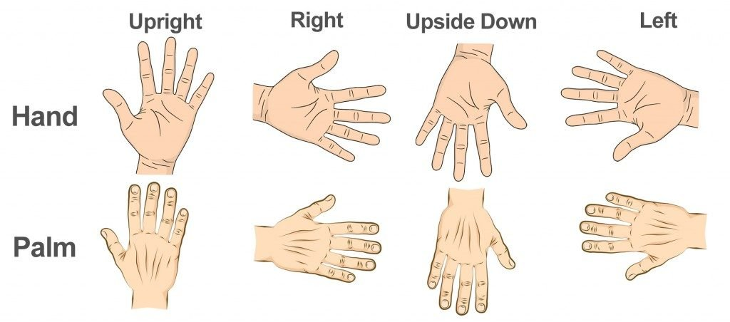 The different hand orientations that the researchers showed their participants
