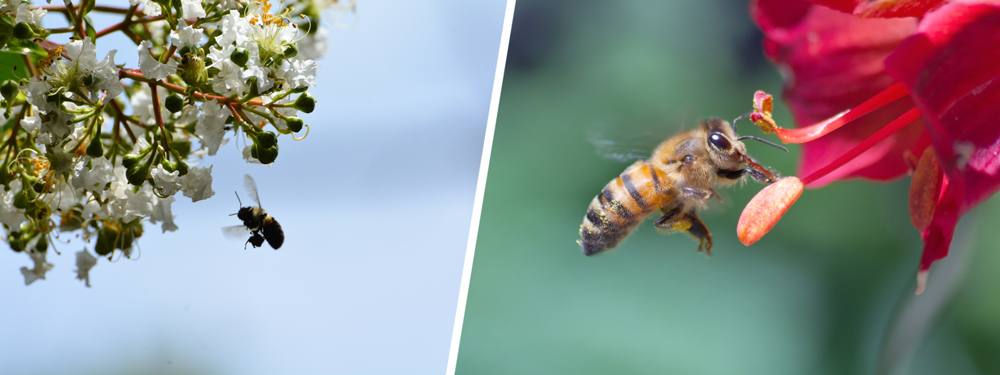 A world without bees is a world in which humans cannot survive