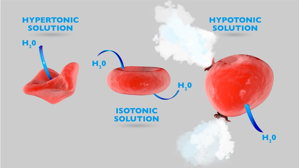 Cell osmosis, cell in isotonic solution, cell in hypertonic solution(Naeblys)s