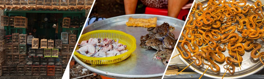Examples of different species sold in wildlife markets.