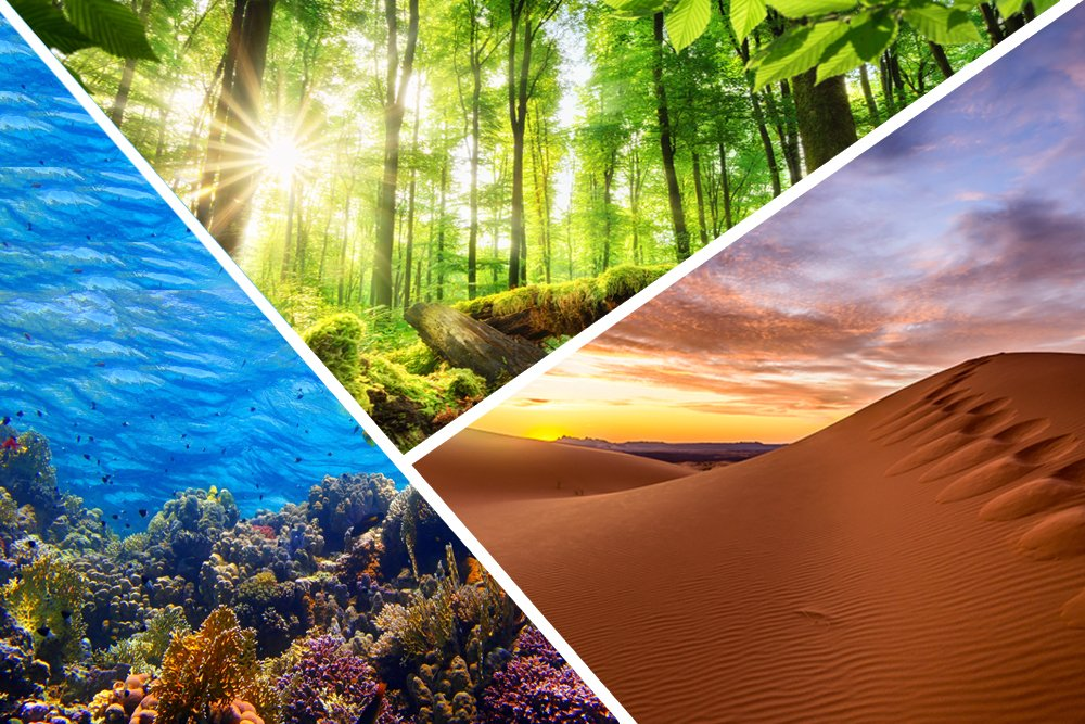 Our planet earth and it's diverse ecosystems