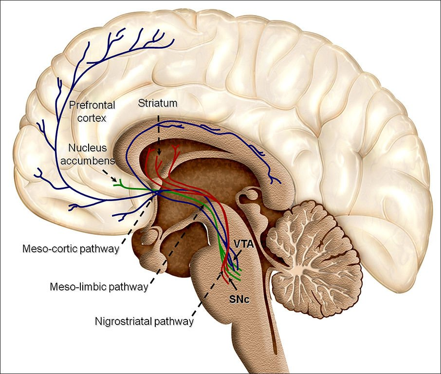 Overview of reward structures in the human brain