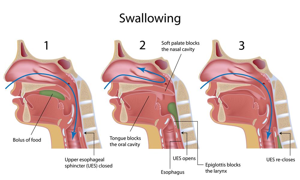 Swallowing process(Alila Medical Media)S