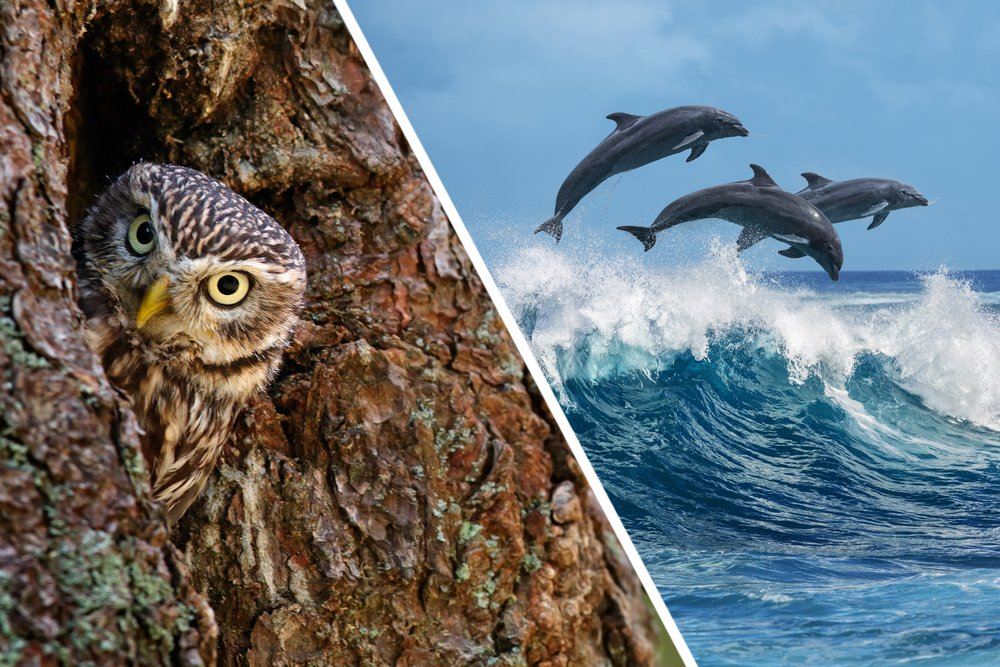 Trees provide homes to birds and the big blue ocean to countless marines species such as dolphins and whales.