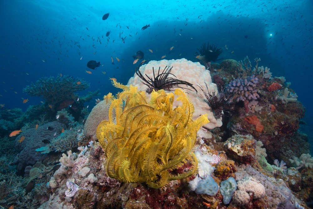 Coral, Diving, Fishes, Underwater scenes taken on the Great Barrier Reef(Jemma Craig)s