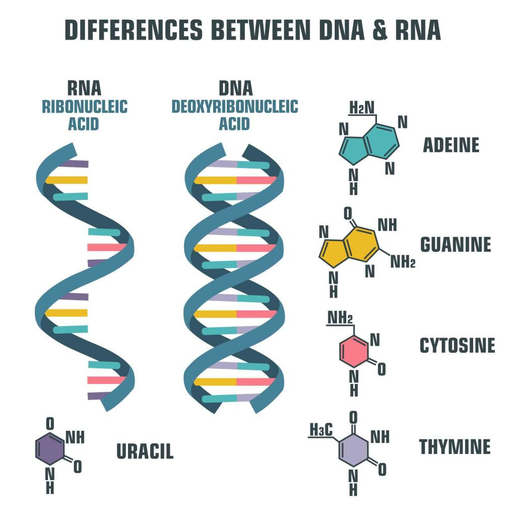 Vector scientific icon spiral of DNA and RNA(ShadeDesign)s