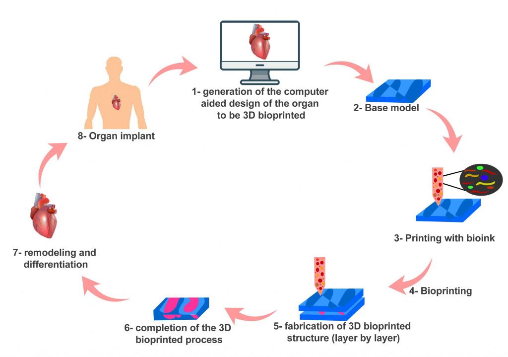 bioprinting process
