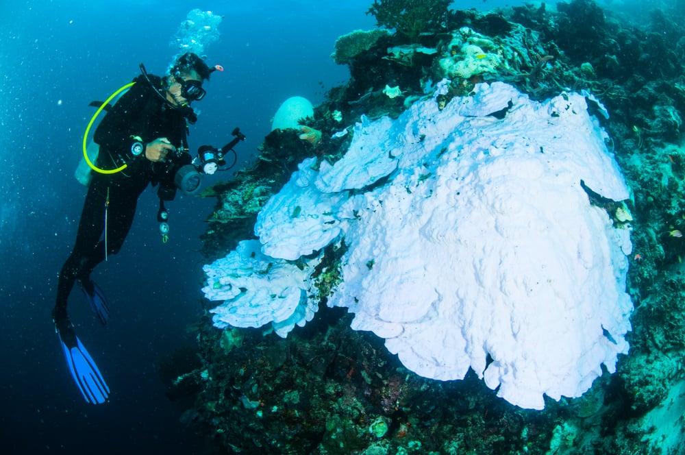 scuba diving diver kapoposang sulawesi indonesia bleaching underwater(fenkieandreas)s