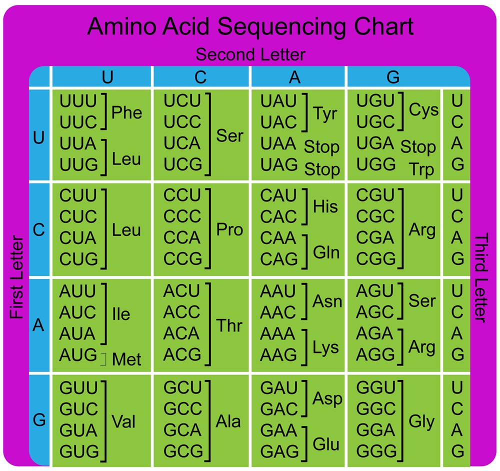 Amino Acid Sequence chart(gstraub)s