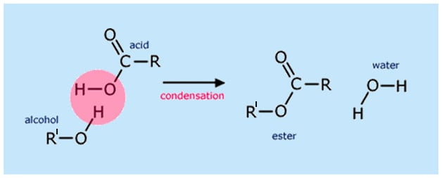 Formation of Esters Carboxylic Acids
