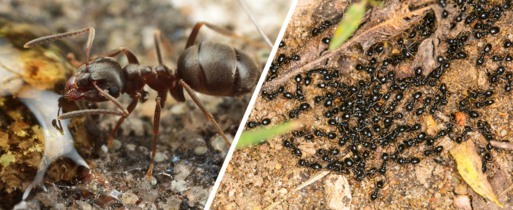 Learn to practice social distance like the ants