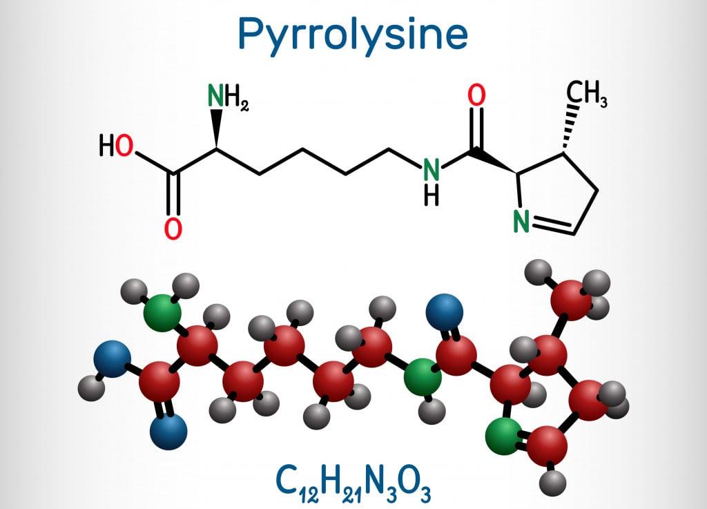 Pyrrolysine, l-pyrrolysine, Pyl, C12H21N3O3 molecule(Bacsica)s