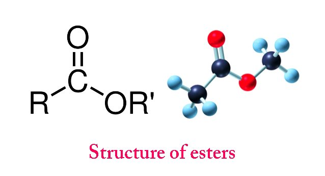 structure of esters