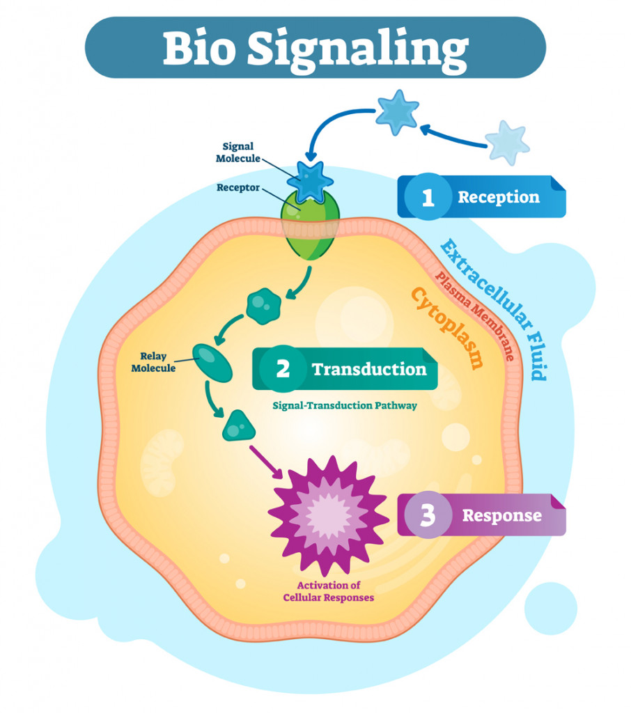 Bio signaling cell communication network system, micro biological anatomy labeled diagram(VectorMine)s