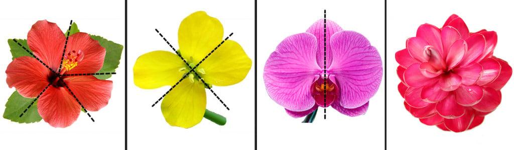 Floral symmetries
