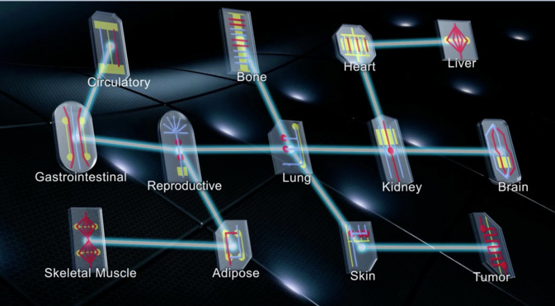 Multiple-organs-on-chips