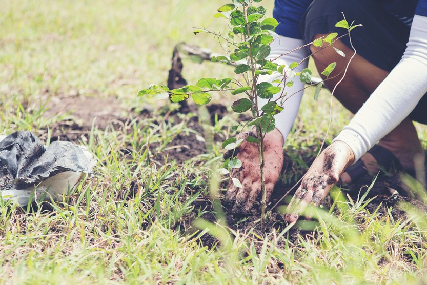 Volunteers to plant trees(boonchoke)s
