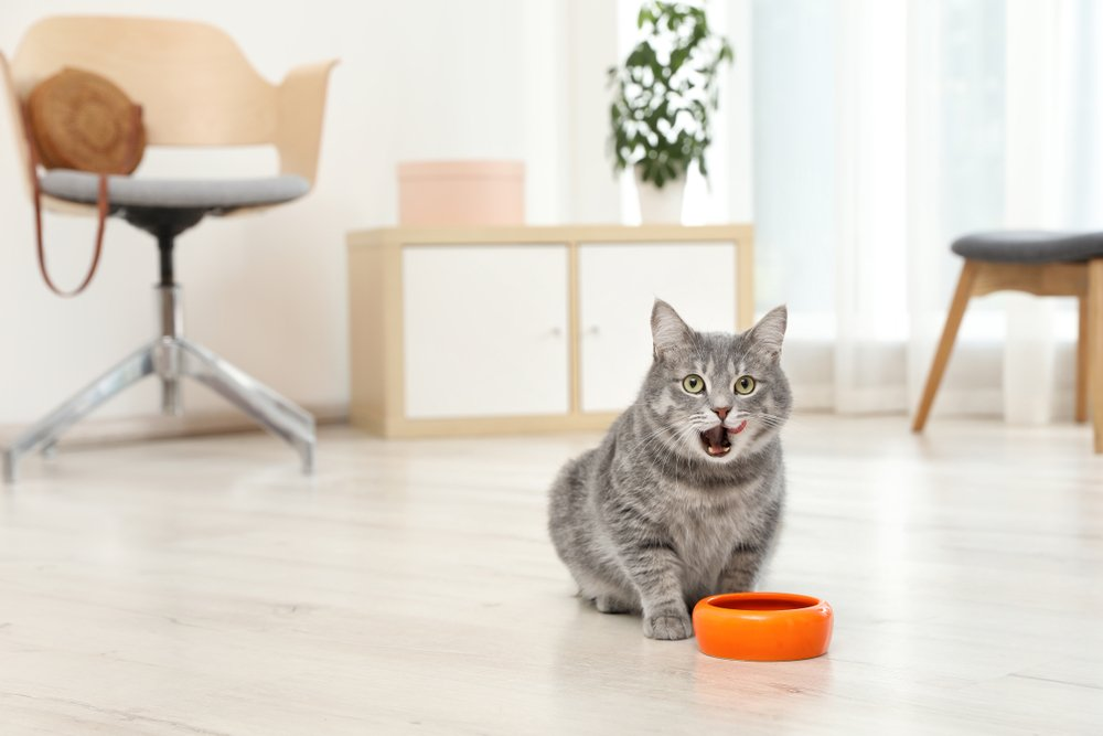 Adorable cat near bowl of food indoors. Pet care(New Africa)S