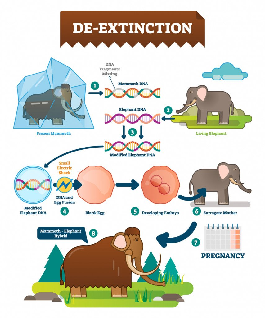 De-extinction infographic vector illustration(VectorMine)S