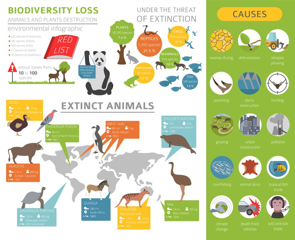 Global environmental problems. Biodiversiry loss infographic(Olha1981)s