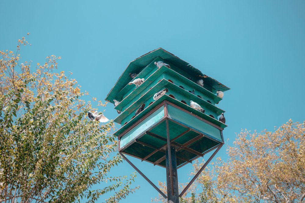 Green dovecote birds house is set on a high pole in the city for private or public breeding of pigeons(frantic00)S