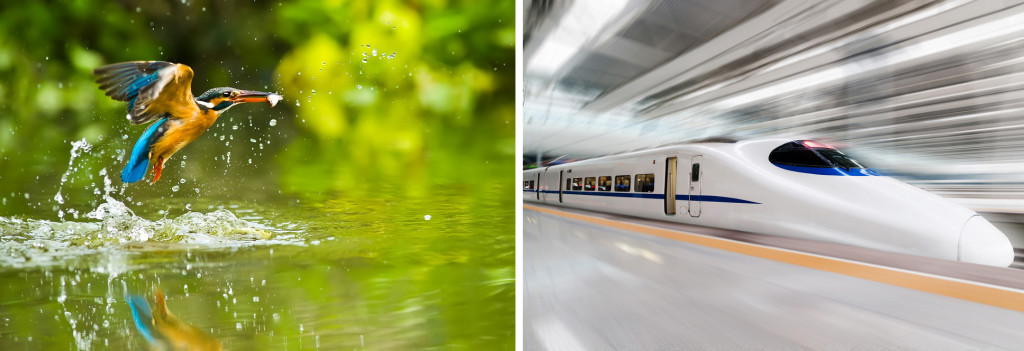 Kingfisher & modern high speed train with motion blur