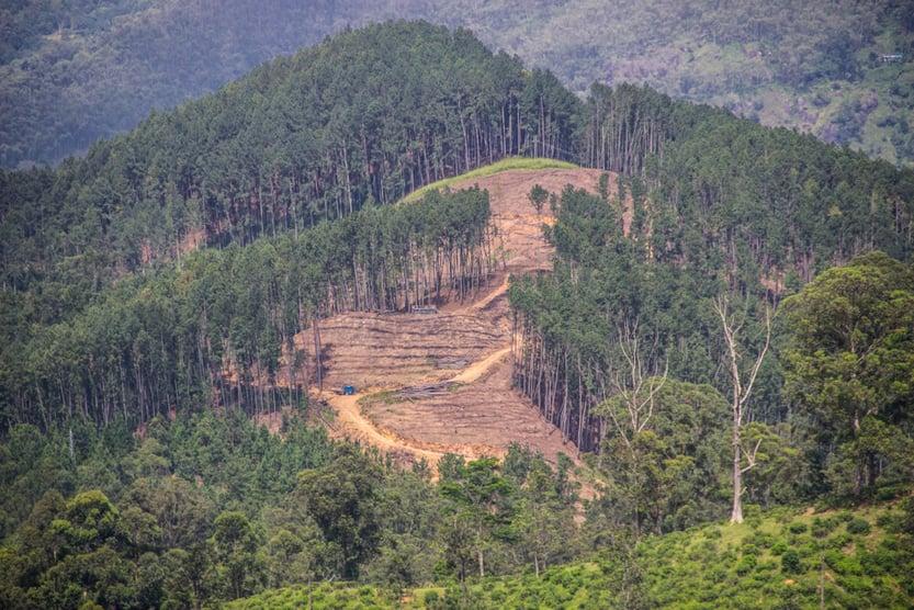 Mountain tropical forests of Sri Lanka and new tea plantation( Maximillian cabinet)s