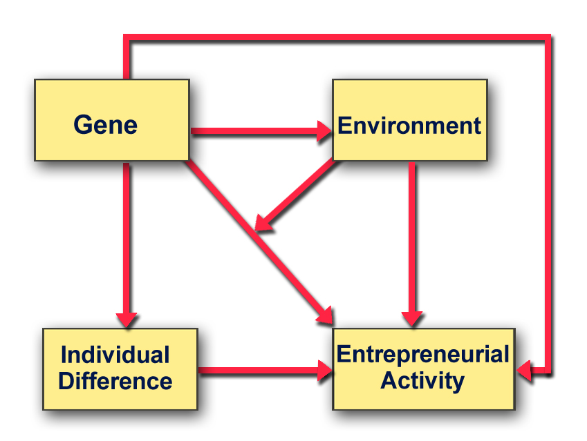 A schematic which shows how genes influence entrepreneurship
