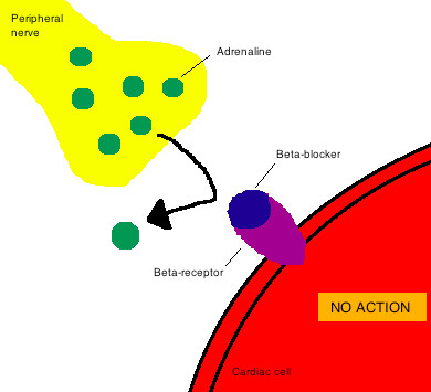 Mechanism of action for beta blockers