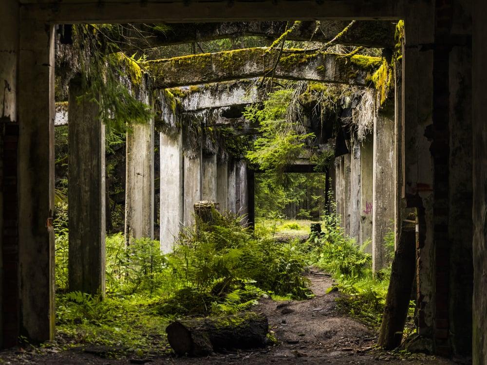 Old dirty broken ruined abandoned building among Bog, Facade ruins of industrial factory(Petr Novacek)s